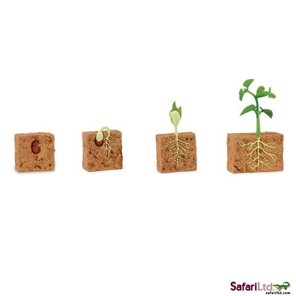 Safari Ltd. - Životní cyklus Zelená fazole